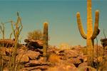 Cactus Desert Camel Rescue