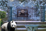 Can You Escape Baby Panda